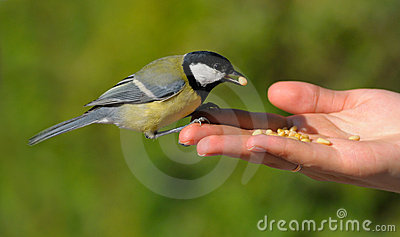 Mano dell uccello reale