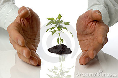 Manos que ahuecan la pequeña planta