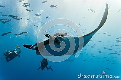 Manta et plongeurs sur le récif