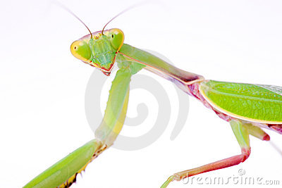 Mantis stare to you