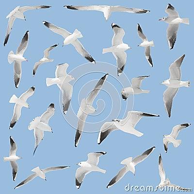 Many birds on sky background