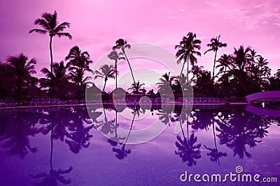 Many black palm on a night beach purple night