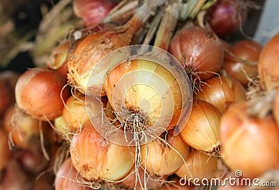 Many bulb onions