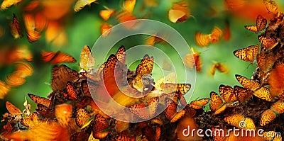 Many butterflies