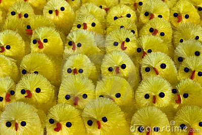 lots of  chicks