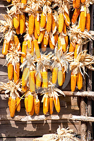 Many corn.