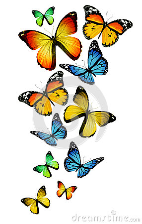 Many different butterflies on background