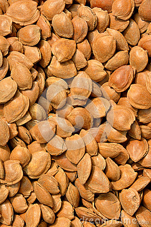 Many dry apricot nut