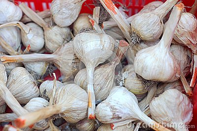 Many garlic