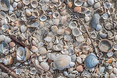 Many kind of shells