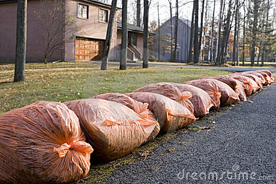 Many orange garbage bags at curb