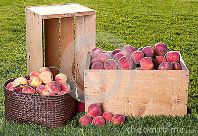 Many peaches in wooden crate and basket