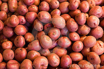 Many red potatoes