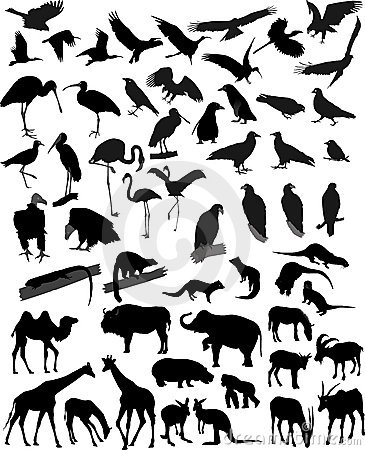 Many silhouettes animals
