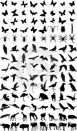 Many silhouettes of animals