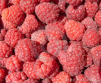 Many tasty fresh raspberry closeup