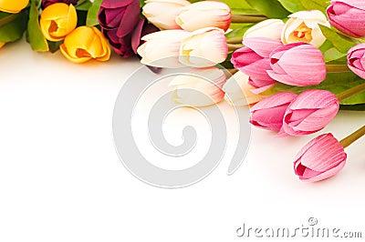 Many tulips isolated