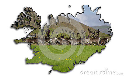 Map of Iceland with  Reindeer ( Rangifer tarandus ) herd