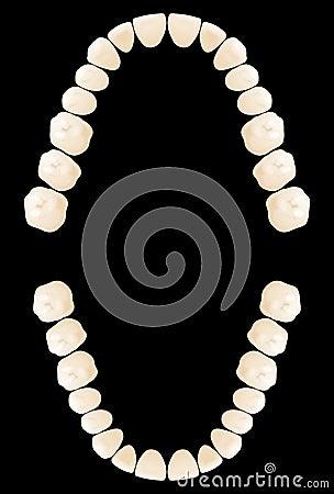 Map teeth