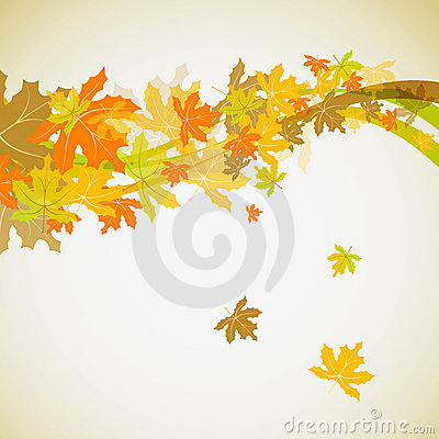 Maple autumn background