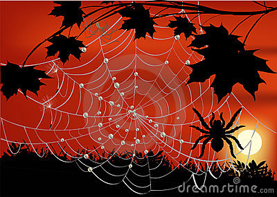 Maple branch and spider in web