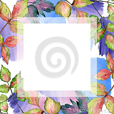 Free Maple Colorful Leaves. Leaf Plant Botanical Garden Floral Foliage. Frame Border Ornament Square. Royalty Free Stock Photo - 123915575