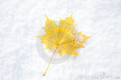 The Maple Leaf. Royalty Free Stock Image - Image: 11403796