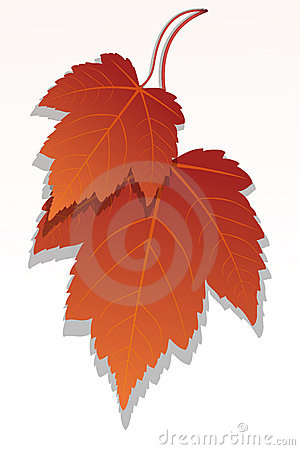 Free Maple Leaf  Royalty Free Stock Photography - 16684087