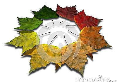 Maple Leaf Autumn Spectrum