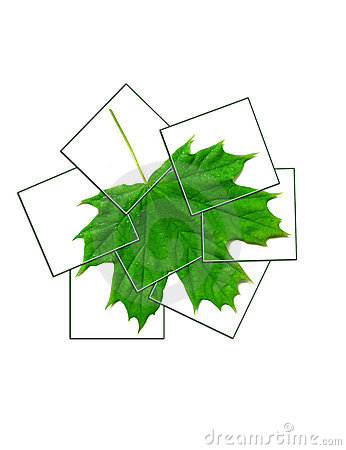 Free Maple Leaf Collage Royalty Free Stock Photos - 9662198