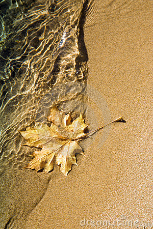 Maple leaf at lake shoreline