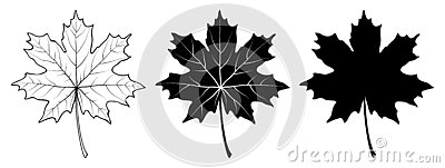 Maple leaf. Linear, silhouette. Vector illustration Vector Illustration