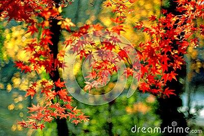 Maple leaf in Nanjing-4