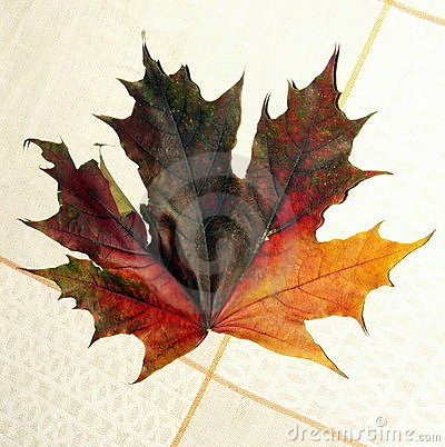 Maple leaf on tablecloth