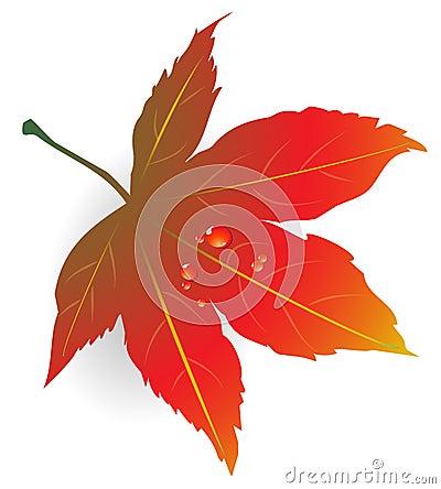 Maple Leaf w/ water drops