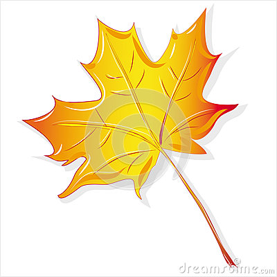 Maple leaf yellow