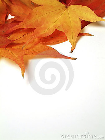 Free Maple Leaves Stock Photos - 43953