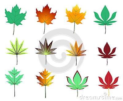 Maple leaves assortment