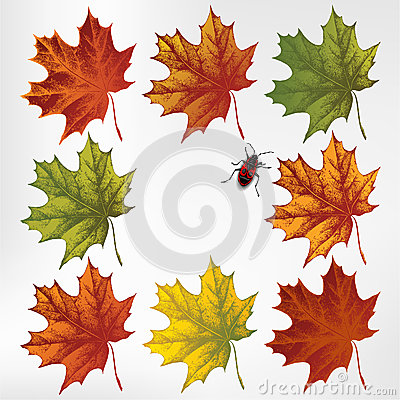 Maple leaves in autumn, set. Vector illustration