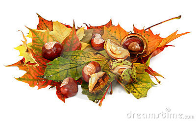 Maple leaves and chestnuts #3