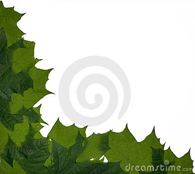 Maple leaves corner