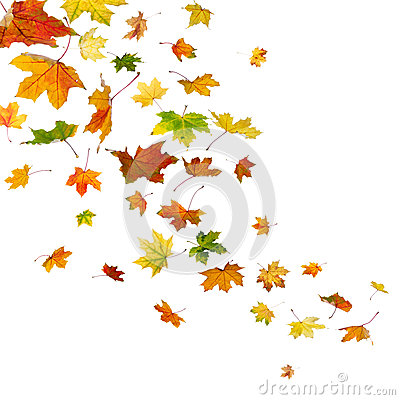 Free Maple Leaves Falling Royalty Free Stock Image - 32546086