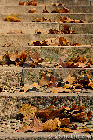 Free Maple Leaves On A Stair Stock Photography - 3720732