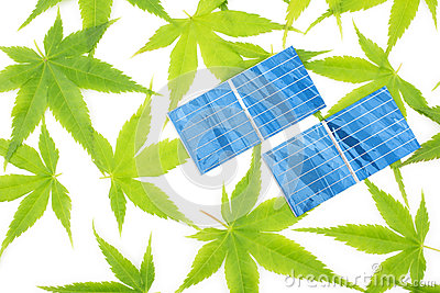 Maple leaves and solar cells