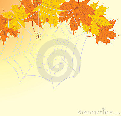 Maple leaves with spiderweb