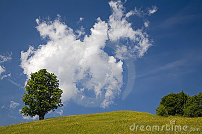 Maple tree and clouds