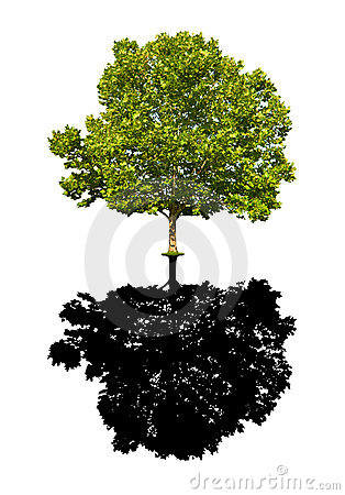 Free Maple Tree Isolated Royalty Free Stock Images - 5824219