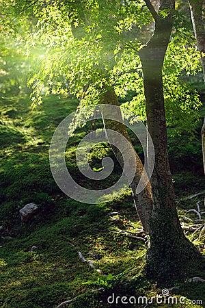 Maple tree under sunlight