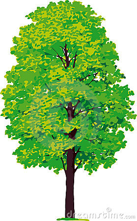 Maple tree. Vector