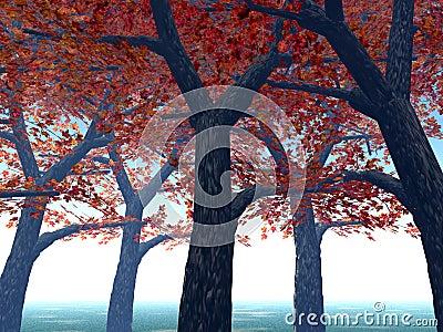 Maple Trees 3
